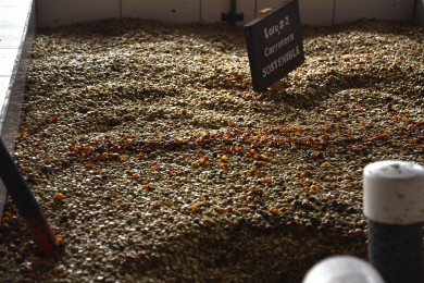 Salva Negra – Coffee beans