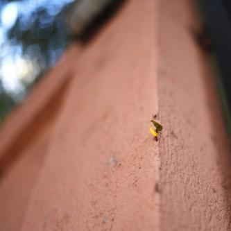 Managua –Ants