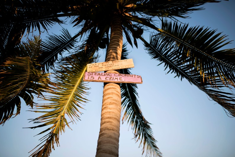Don't steal coconuts on Caye Caulker
